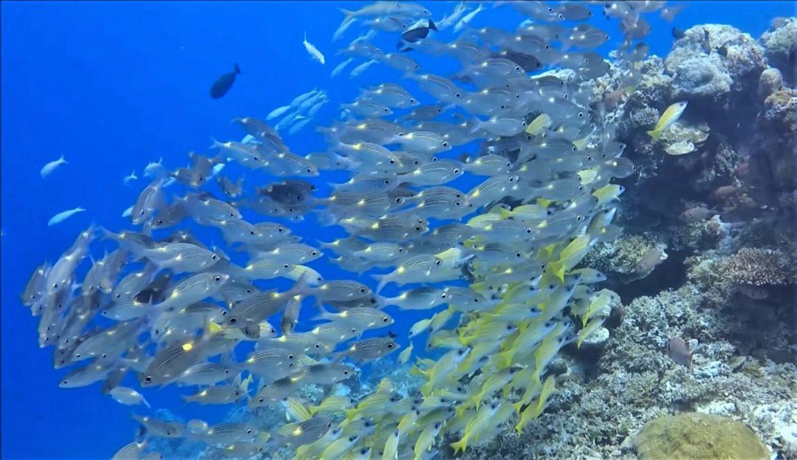 SourceBlue Corner - Palau, Micronesia